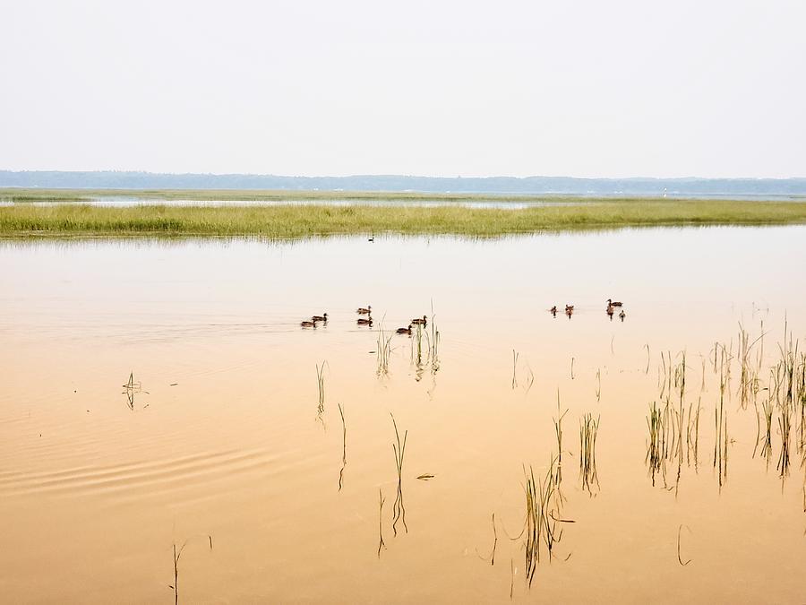 Ducks at Dawn by Rural America Scenics