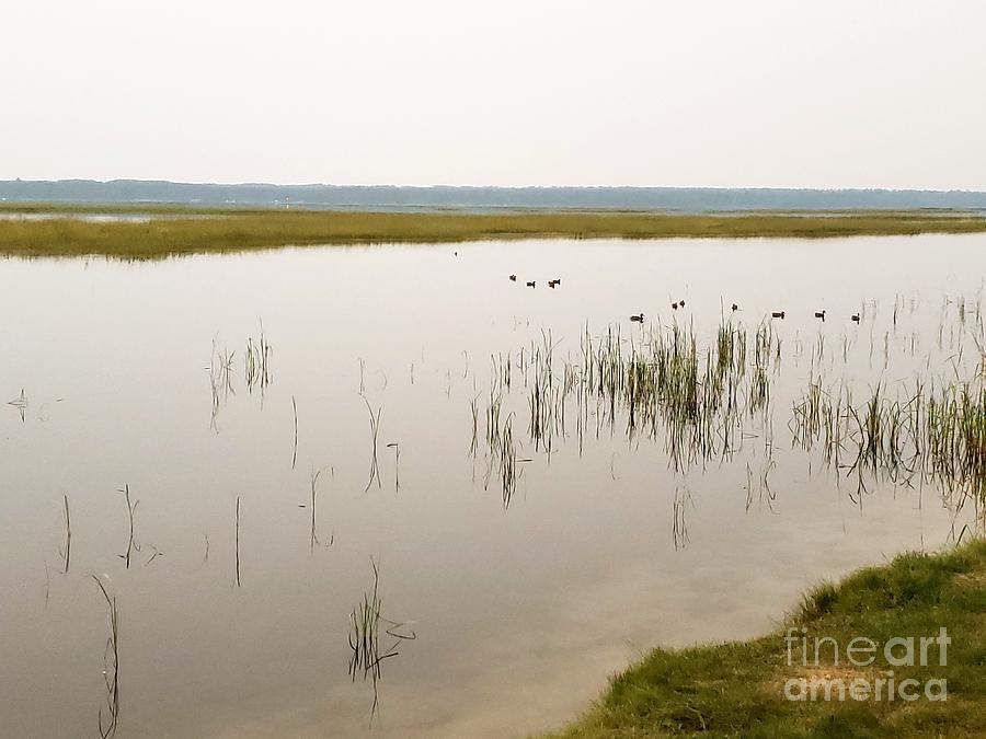 Ducks at Dusk by Rural America Scenics