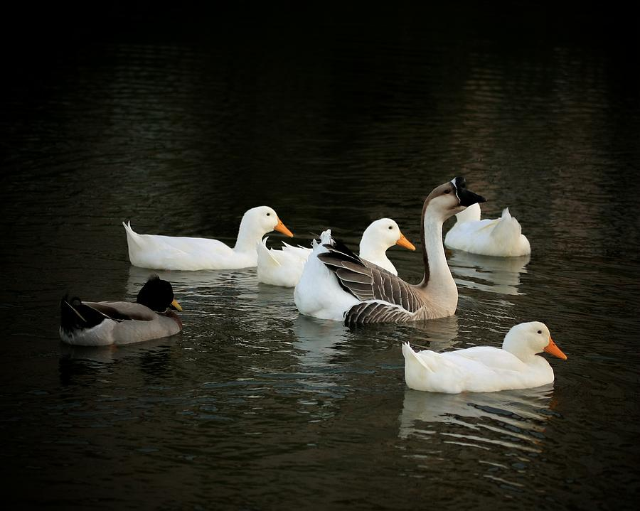 Wildlife Photograph - Ducks At The Pond by Butch Ramirez