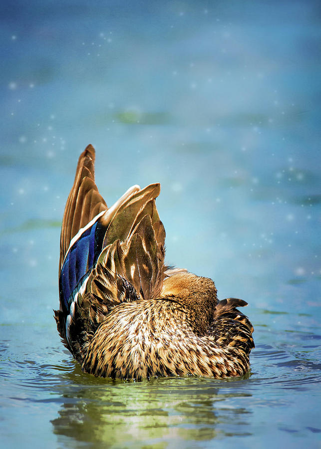 Ducky Grooming On Blue by Bill Tiepelman