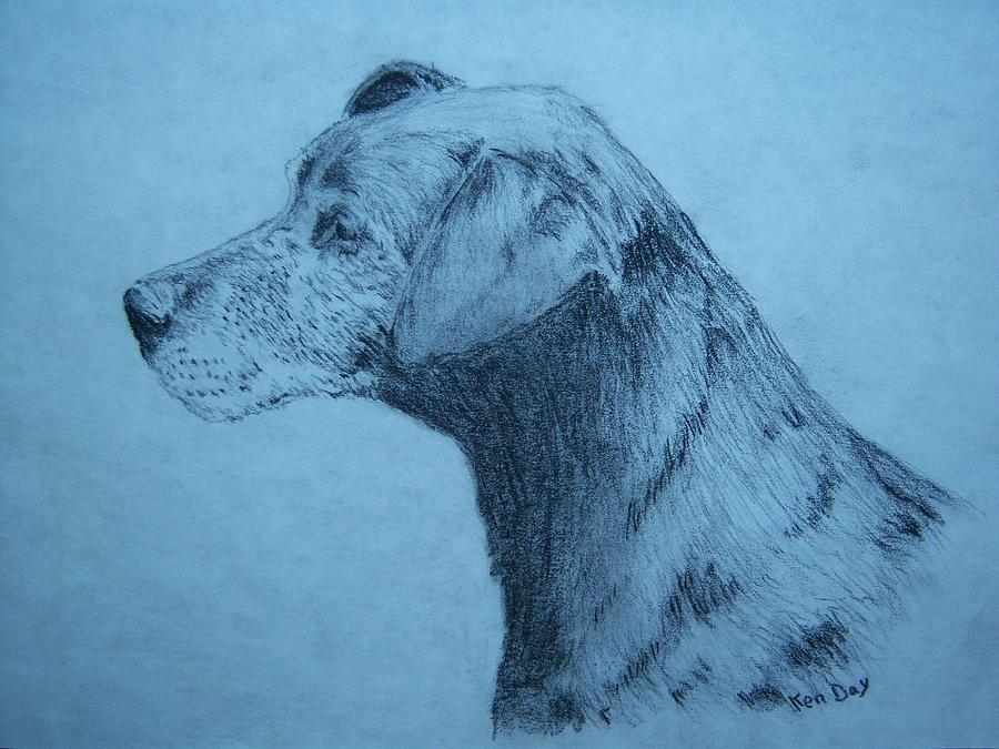 Dudley Drawing by Ken Day