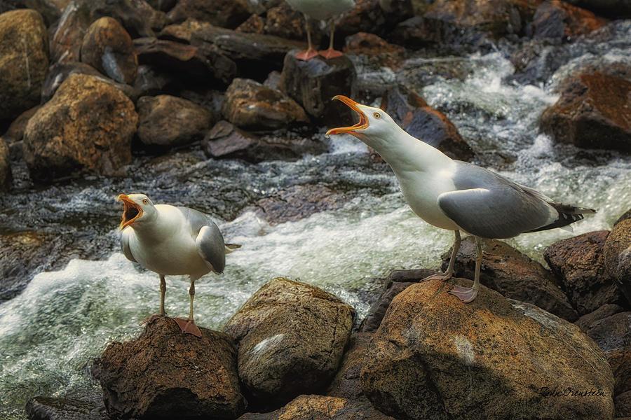 Alewives Photograph - Duet by Ronn Orenstein