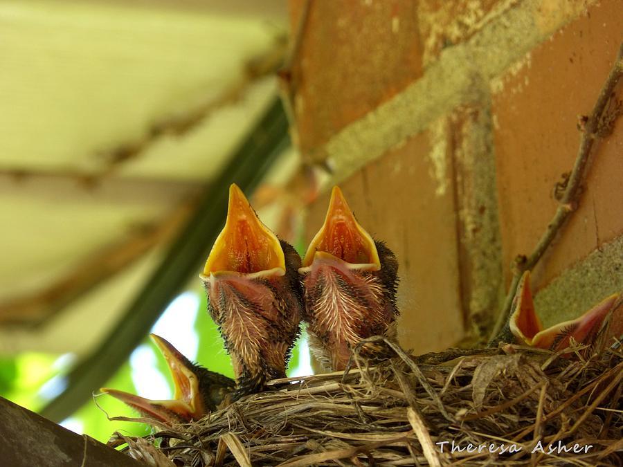 Birds Photograph - Duet by Theresa  Asher