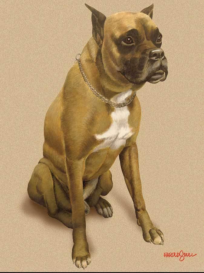 Dog Mixed Media - Duke by Harold Shull