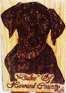 Custom Pet Portrait Drawing - Duke Of Howard County Pets Portrait From A Photo by Marla Gebhardt