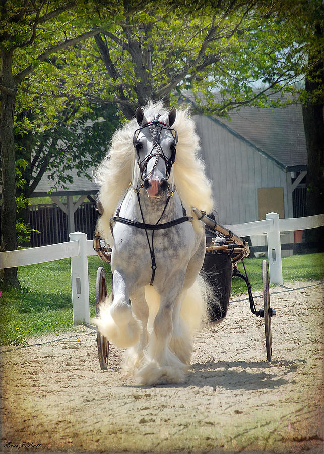 Horses Photograph - Dunbrody Drive by Fran J Scott