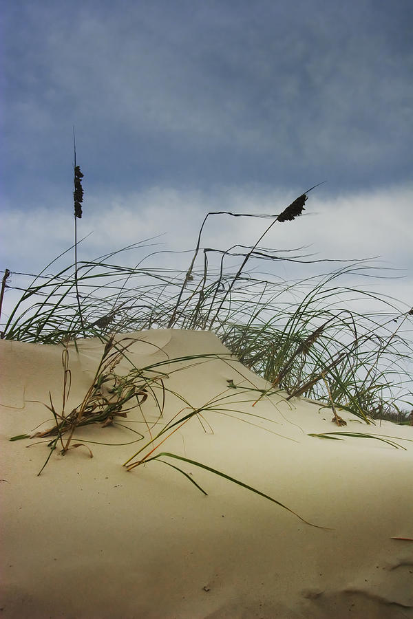 Landscape Photograph - Dune And Beach Grass by Randall Nyhof