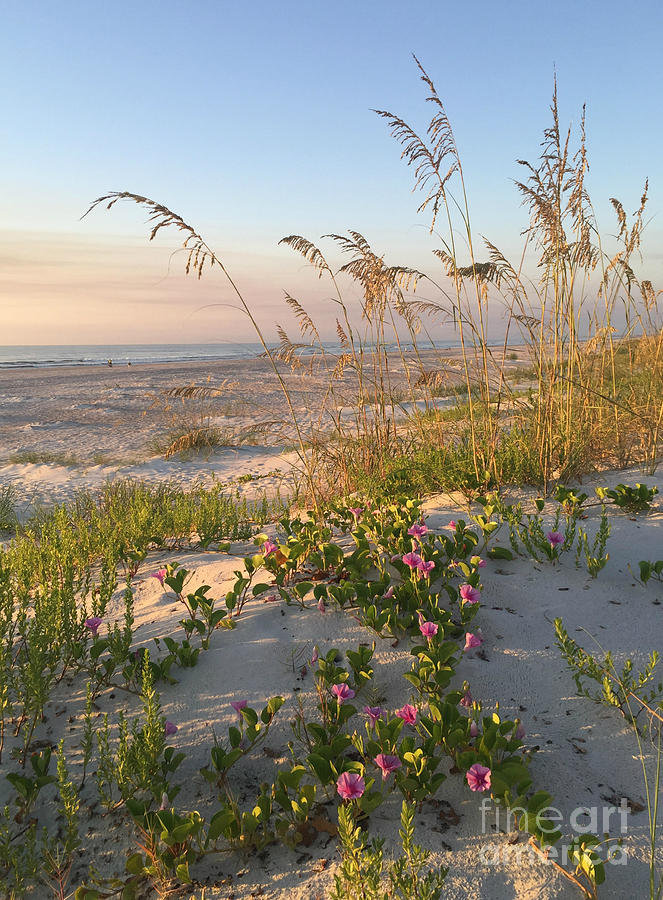 Dune Bliss by LeeAnn Kendall