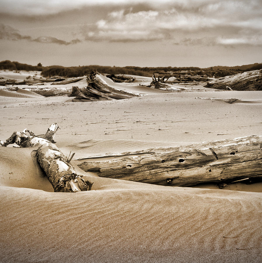 Sand Dunes Photograph - Dune Country by Bonnie Bruno