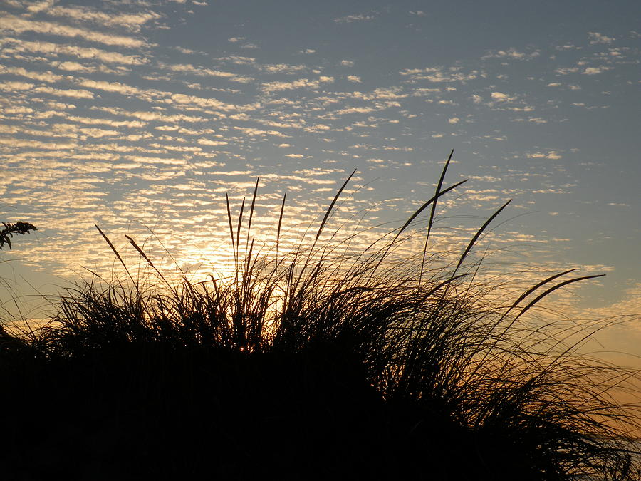Sunrise Photograph - Dune Grass by Donald Cameron