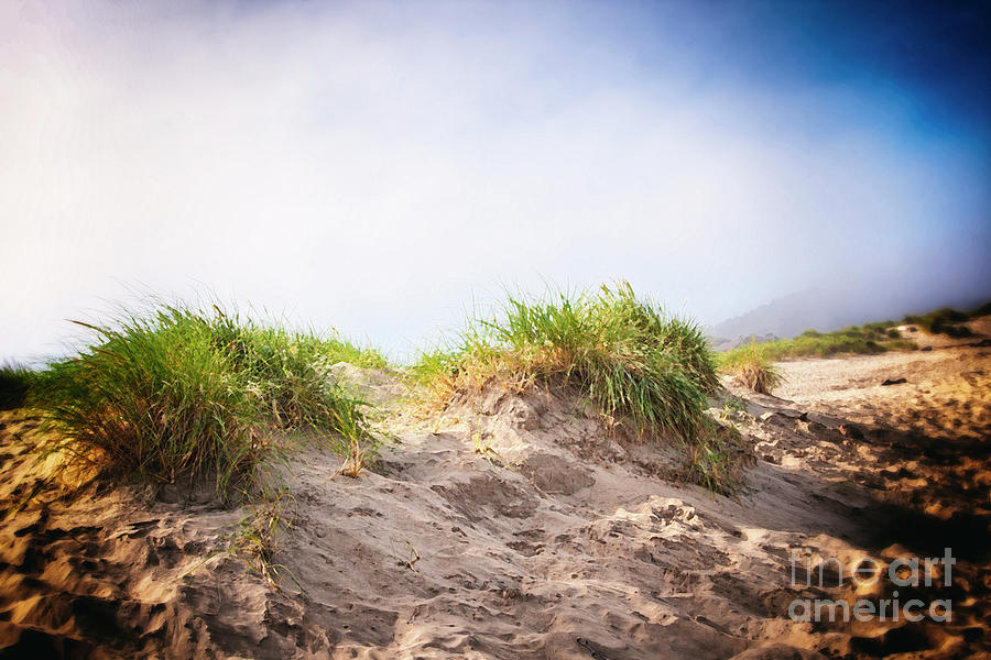 Artistic Photograph - Dune Grass on the Foggy Coast by Lincoln Rogers