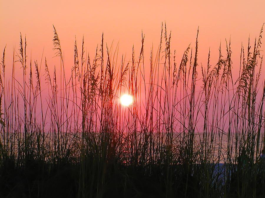 Florida Photograph - Dune Grass Sunset by Bill Cannon
