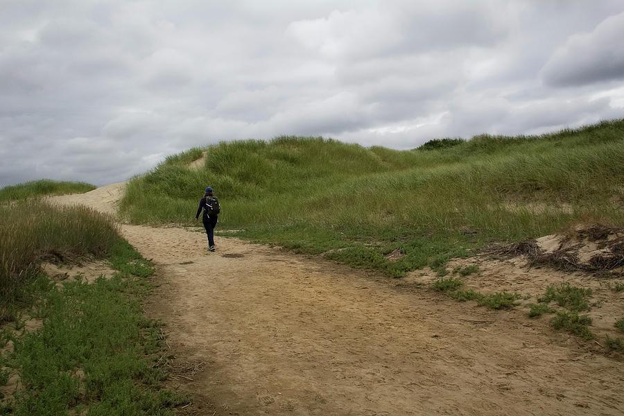 Dune Path by Michael Friedman
