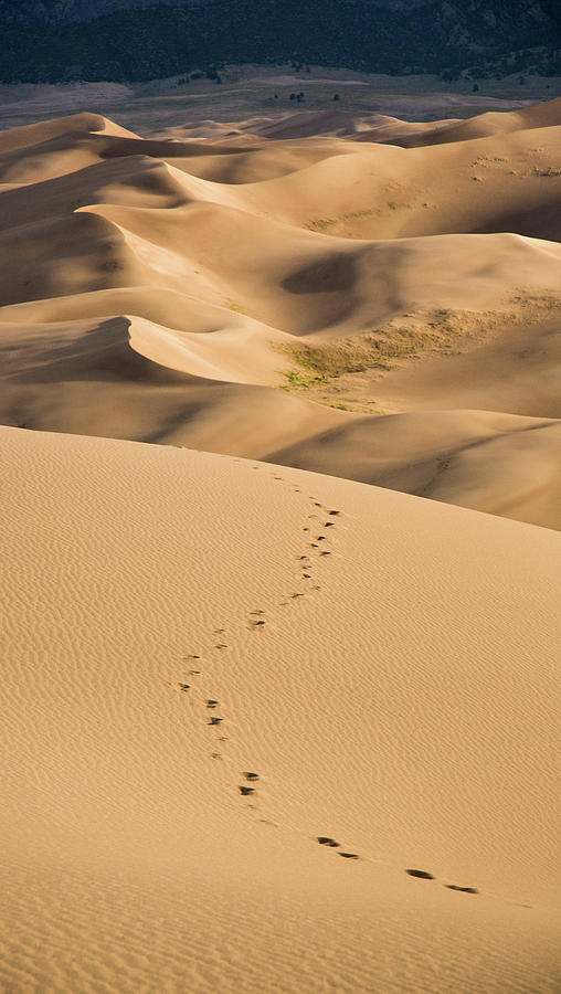 Dunefield Footprints by Adam Pender