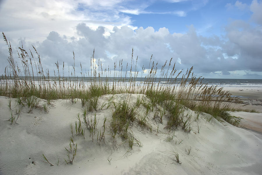 2007 Photograph - Dunes and Sea Oats by Lauren Brice
