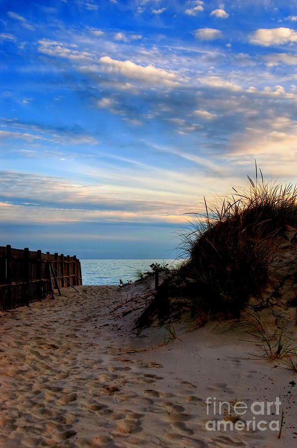 Beach Photograph - Dunes On The Cape by Joann Vitali
