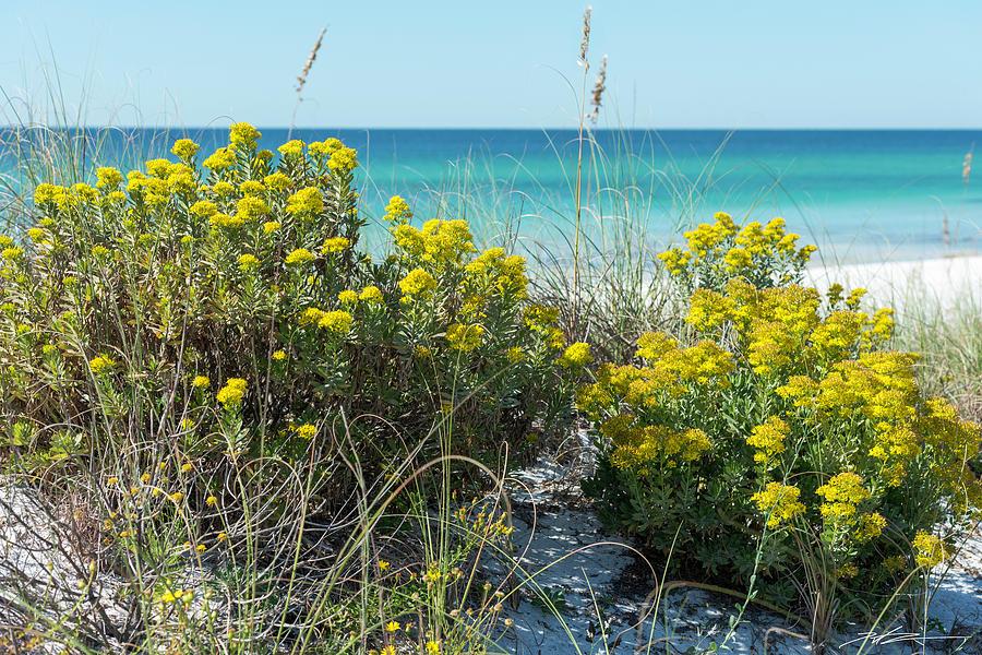 Dunetop Wildflowers By The Beach by Kurt Lischka