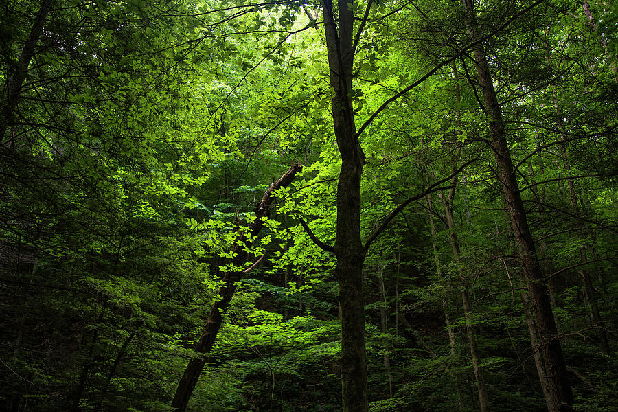 Nature Photograph - Dunlop Hollow by Ron Jones
