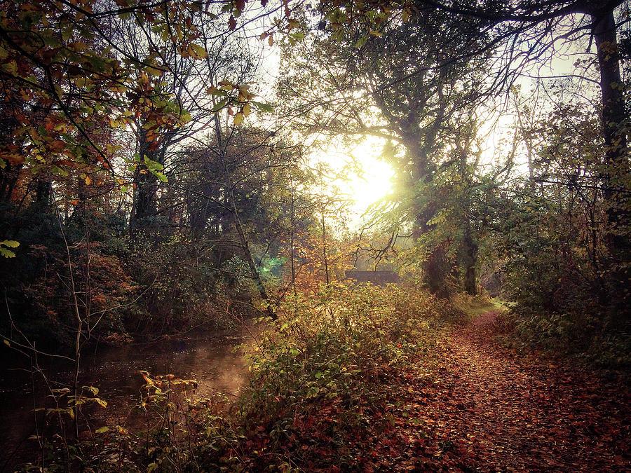 Irish Landscape Photograph - Dunmore Wood - Autumnal Morning by No Alphabet