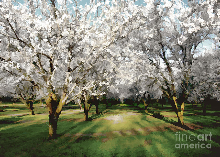 Durham Almond Blossoms by Kathleen Gauthier