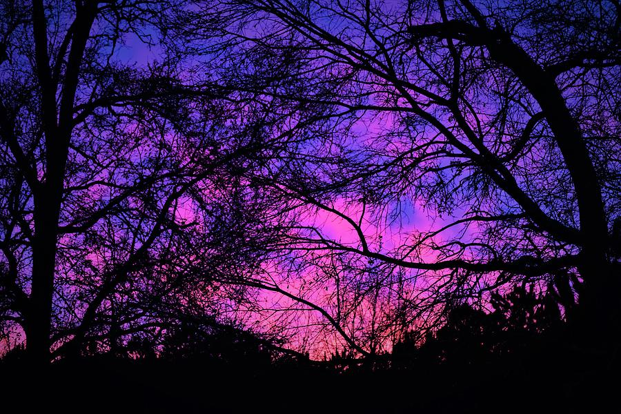 Dusk And Nature Intertwine by Jason Denis