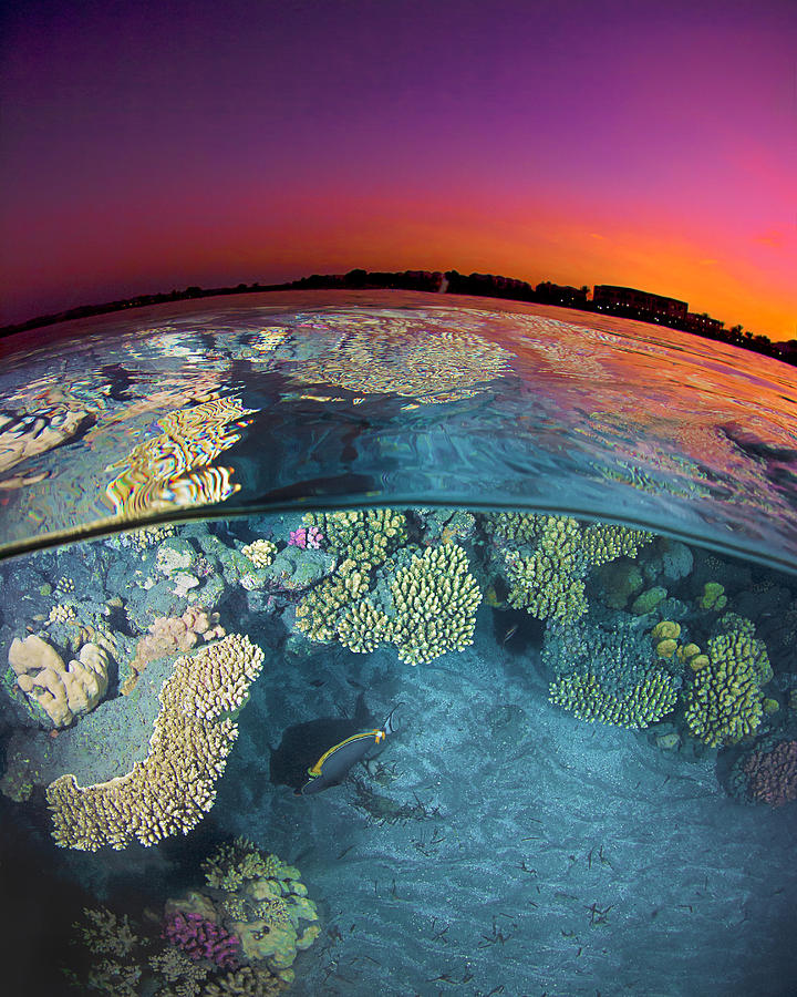 Dusk At The Red Sea Reef Photograph by Henry Jager
