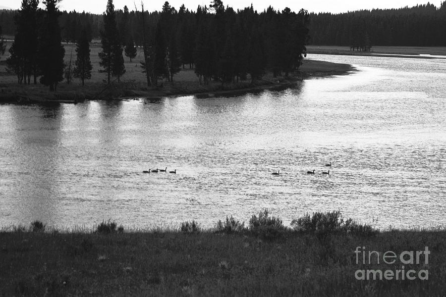 Wildlife Photograph - Dusk At The Yellowstone River by Susan Chandler