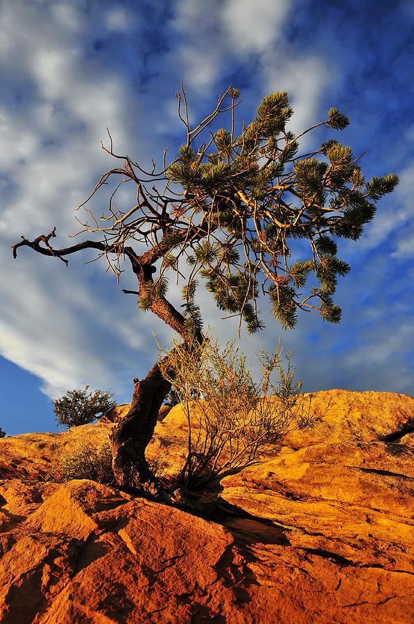Tree Photograph - Dusk Dance by Skip Hunt