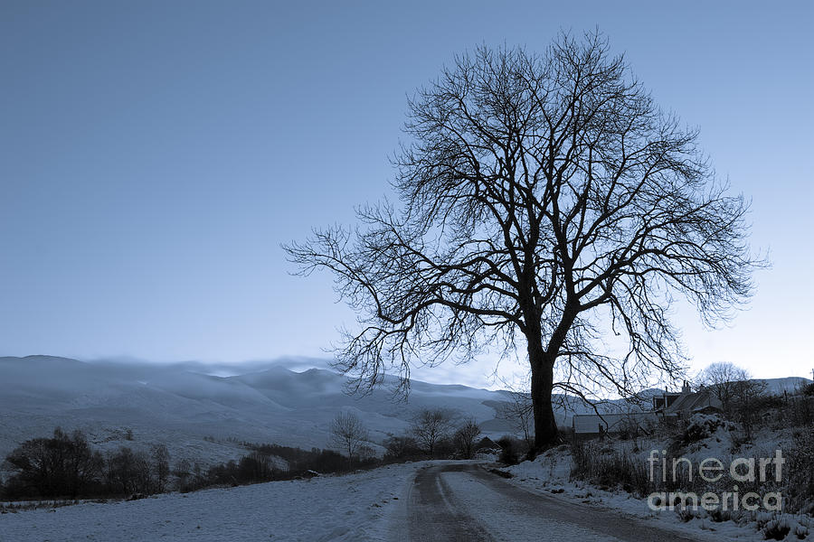 Tree Photograph - Dusk in Scottish Highlands by David Bleeker