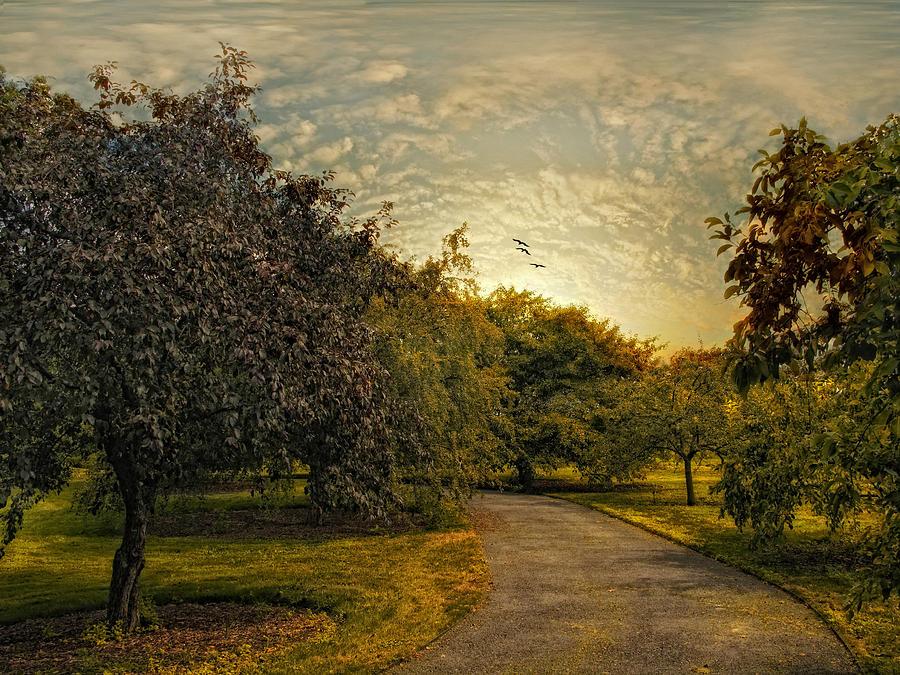 Nature Photograph - Dusk by Jessica Jenney