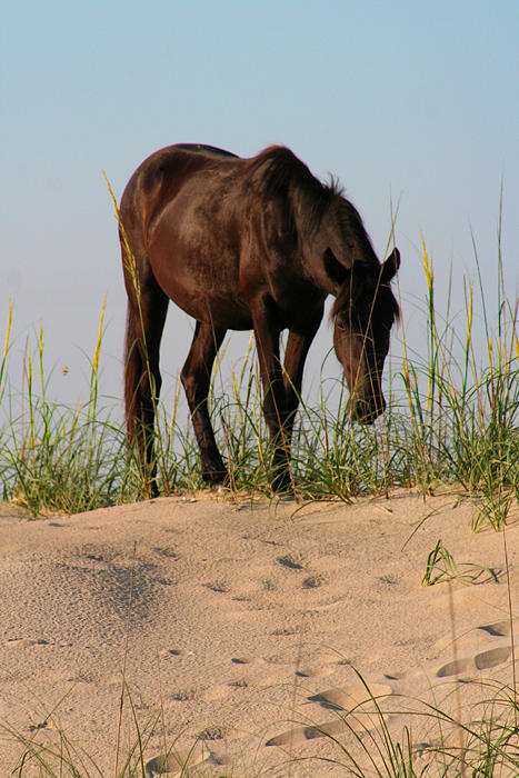 Horses Photograph - Dusk On The Dunes by Julie Bromley