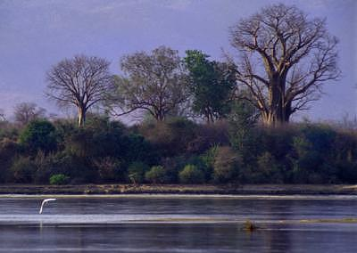 Water Tree Photograph - Dusk Over Zambezi River by William Love
