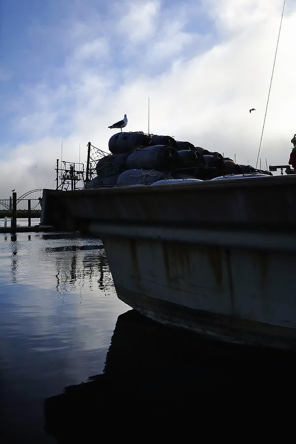 Dusk Seagull 2386 Photograph