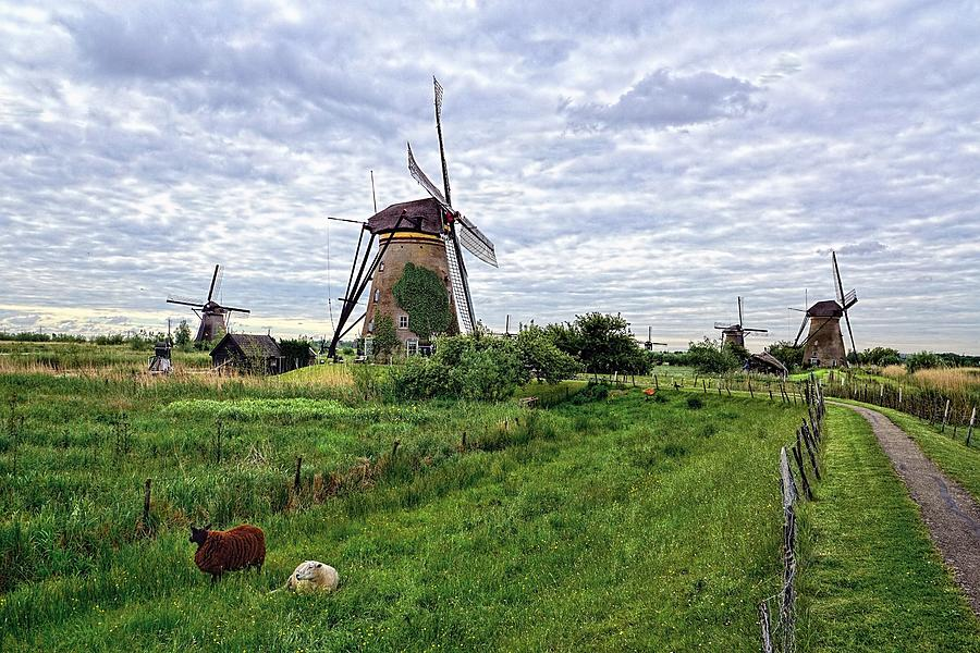 Windmills Photograph - Dutch Icon by Lanis Rossi
