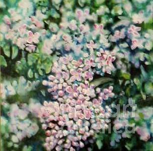 Lilacs Painting - Dwarf Korean Lilac by Karen Sloan
