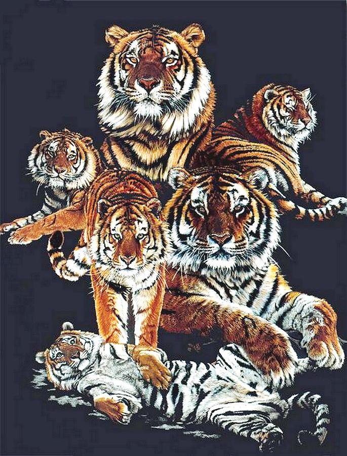 Tiger Drawing - Dynasty by Barbara Keith