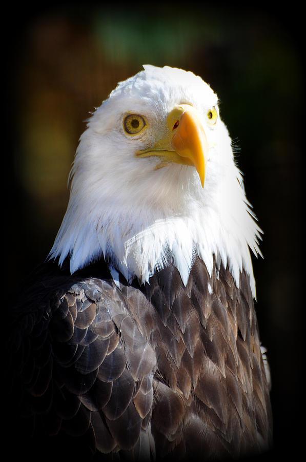 Eagle Photograph - Eagle 14 by Marty Koch