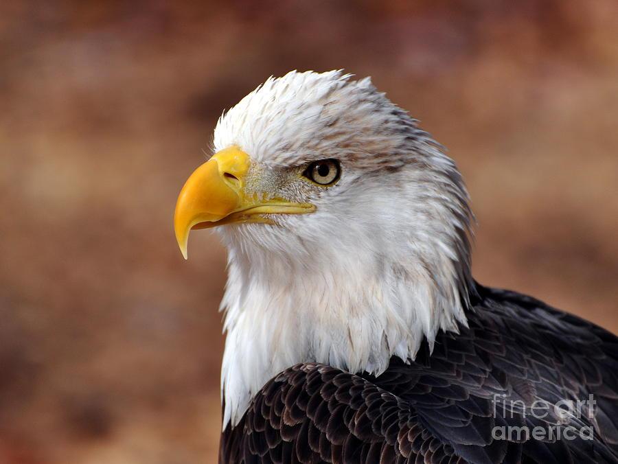 Eagle Photograph - Eagle 25 by Marty Koch