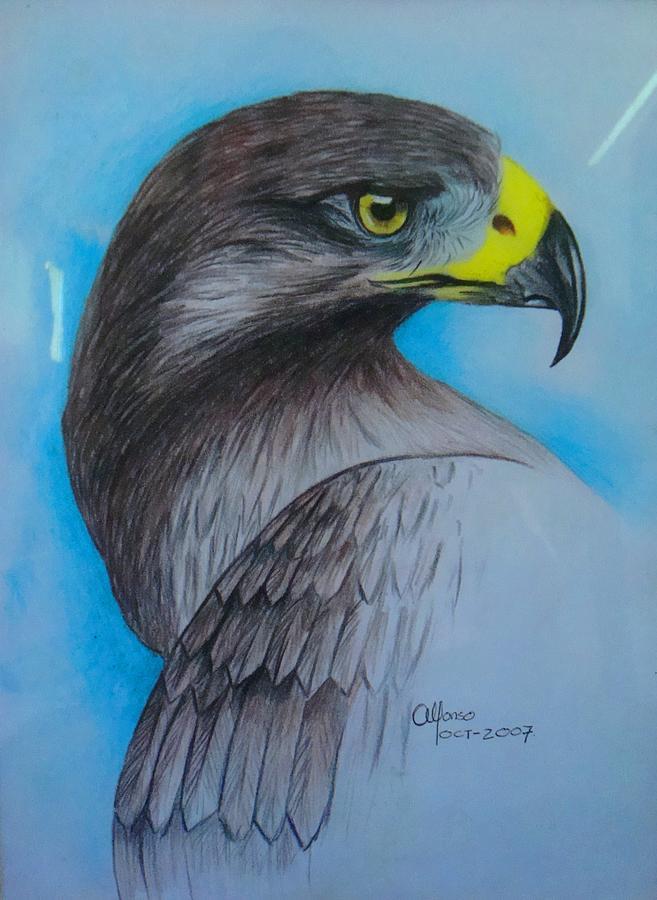 Eagle Drawing by Alfonso Uitz Valdivia