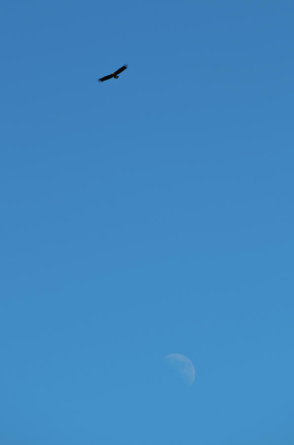 Europa Photograph - Eagle and Moon by Kolbein Svensson