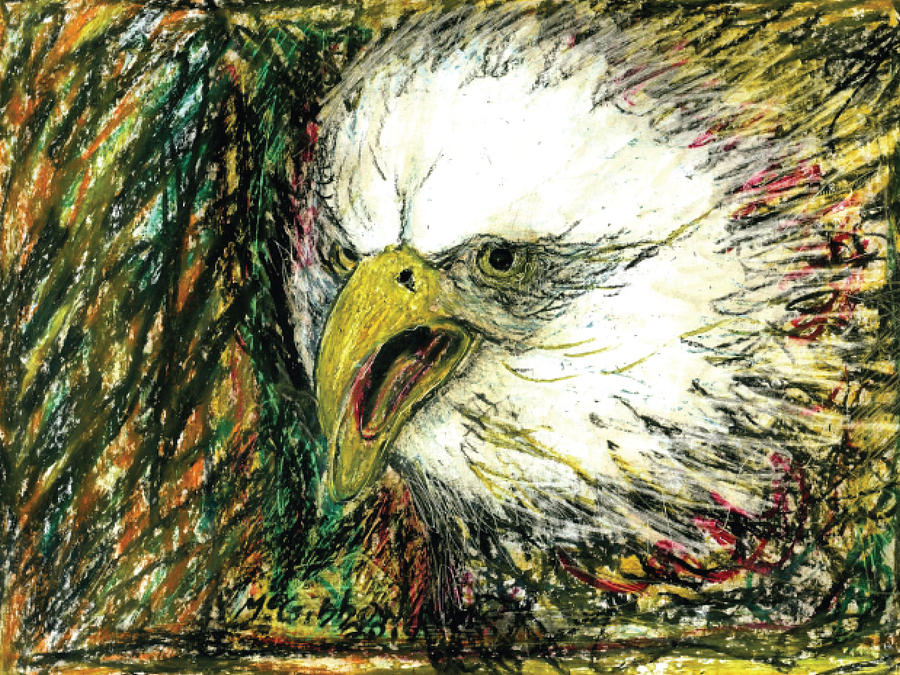 Eagle Drawing - Eagle by Dan McGibbon