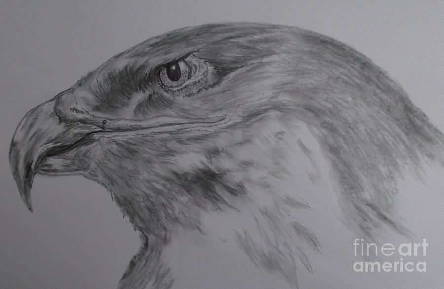 Eagle Painting - Eagle Eyed. by Cynthia Adams