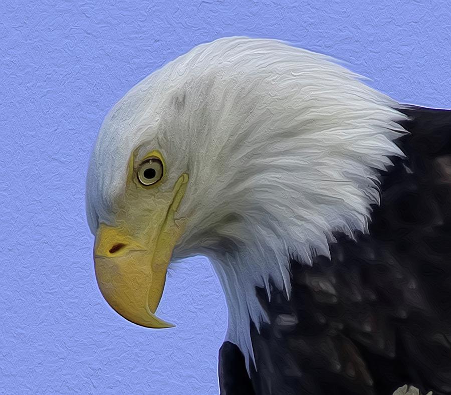 Bald Eagle Photograph - Eagle Head Paint by Sheldon Bilsker