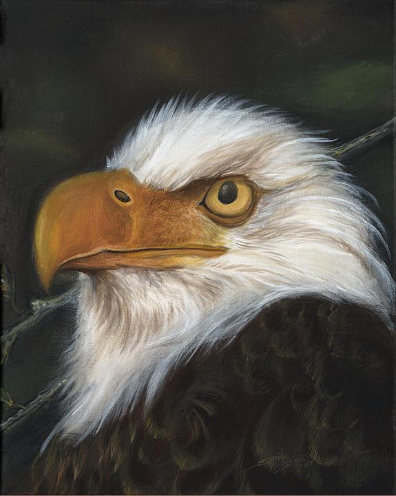 Eagle Head Print by Shane Lieske