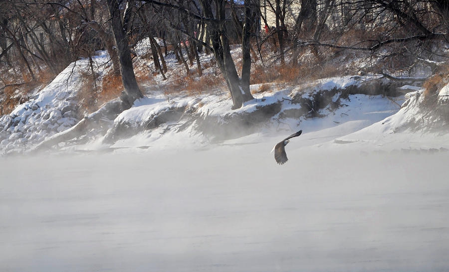 Eagle In The Mists Photograph