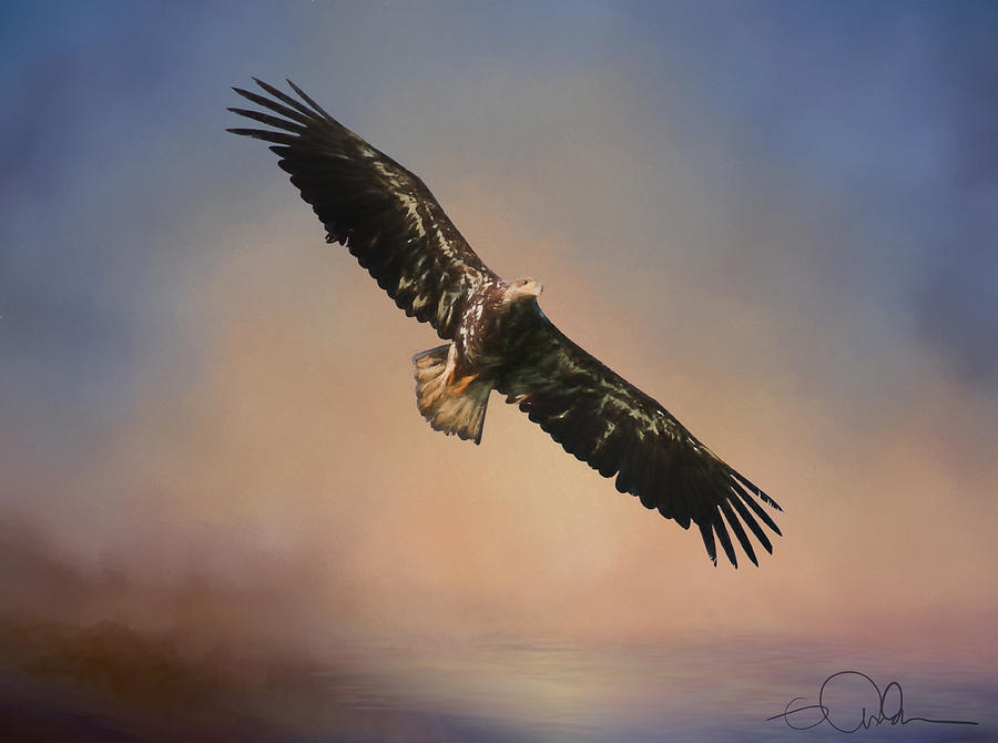 Eagle In The Sky Art Digital By Gloria Anderson