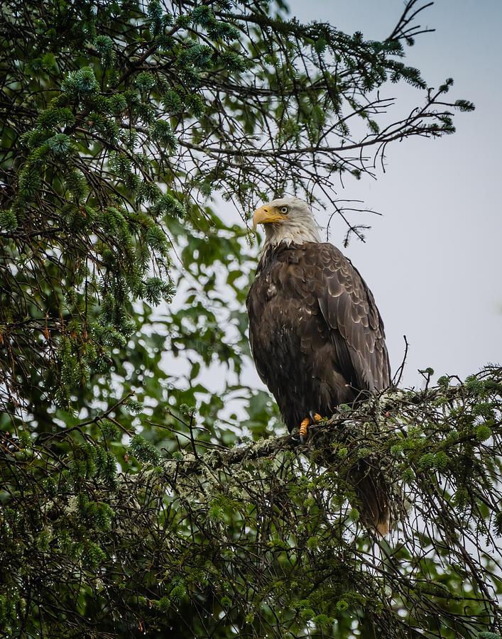 Eagle Feet by Ken Foster