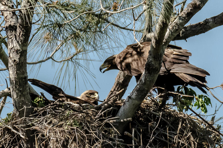 Eagle S Aerie Photograph By Michael Allred
