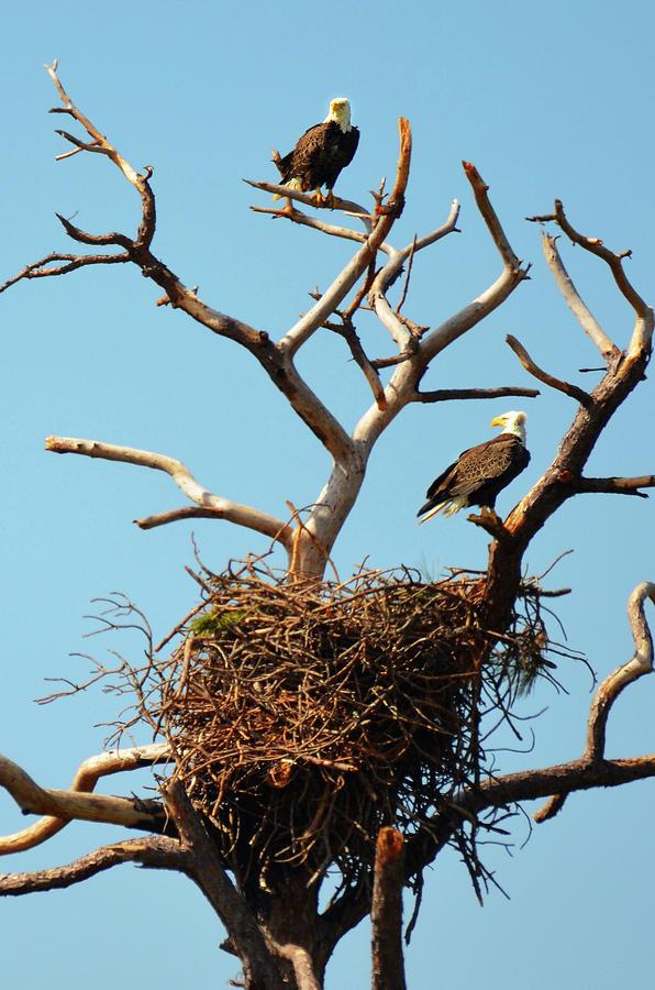 Eagles' Nest Photograph by Carla Parris