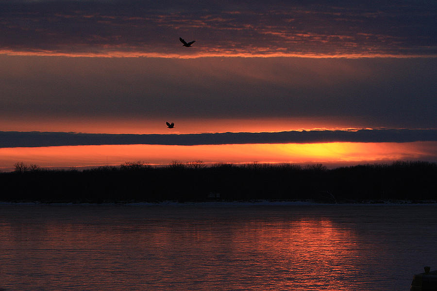 Sunset Photograph - Eagles Over The Mississippi by Dave Clark